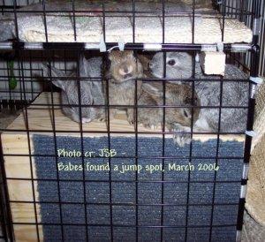 Cuddles_Archive_Babes_FridayMar3OnHidebox.JPG