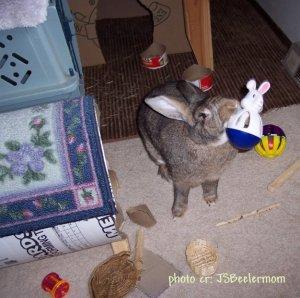 JSBPhotoCR_MommaTossingToyJun29_2009RST2.jpg