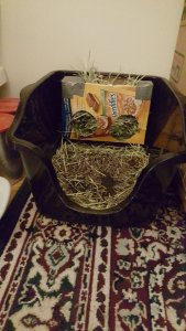 litter box with cereal box feeder.jpg