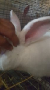 Rabbit2_2.jpg