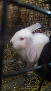 Rabbit3_2.jpg