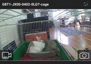 Bunny cam shot.jpg