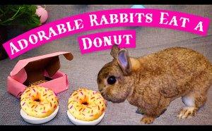 Donut Thumbnail.jpg