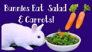 Salad and carrots.jpg