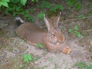 Hot Bunny.JPG