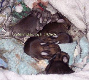 Cuddles_SevenBabies_Day5_2006RS.jpg