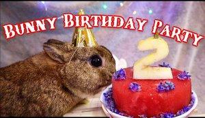 Bunny Birthday party.jpg