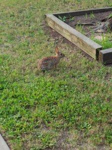 outside bunny.jpg
