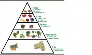 rabbit food pyramid opt.jpg