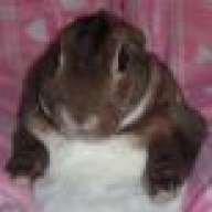 Bo B Bunny