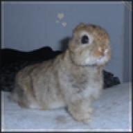 Shaded Night Rabbitry