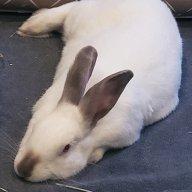 Bunnygreen