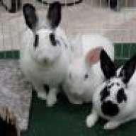 bunnynoses
