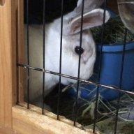 rabbitpeople