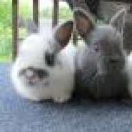 RabbitGirl321