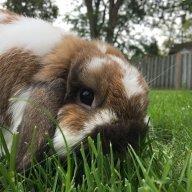 Reese_loves_her_bun
