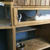 Riverhouse Rabbits