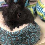 Mooni the bunny