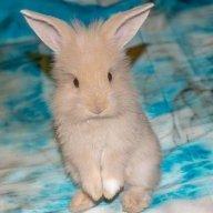 rabbitlover2019