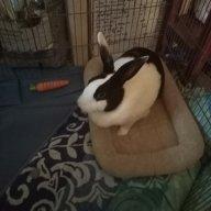 BunnyHunny17