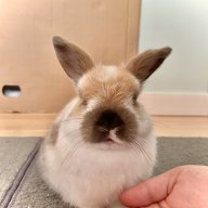 timo.b.bunny