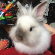 Sarah rabbitry