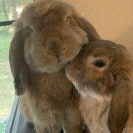 bunnypop