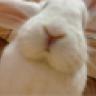 rabbit_bonkers
