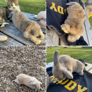 Help with my bunny!