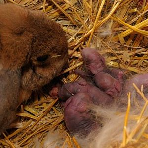 Babies  5 minutes old
