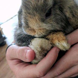 My sweet bunny