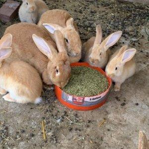 Rabbitsbaby.jpg