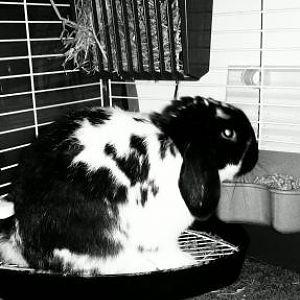 My potty 4-8-2011