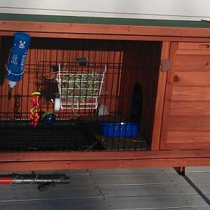 My outdoor hutch