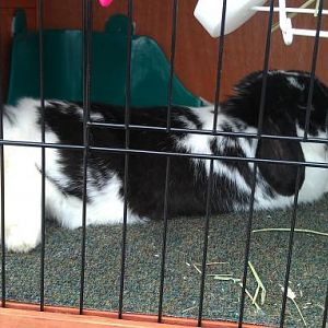 Me in my hutch  5-6-2011