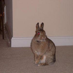 Thumper aka Tinkerbelle