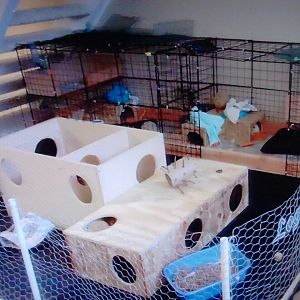bunny condo with attached playpen