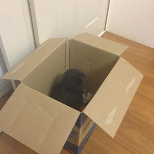 rabbit in a box!