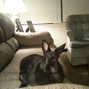 Bunneh On A Couch