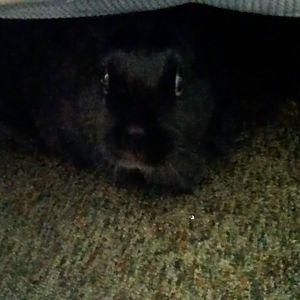 Peek-A-Boo Bunneh!