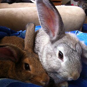 Bonnie and Clara