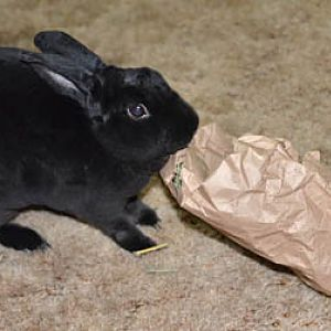 Natasha discovers the bag of hay