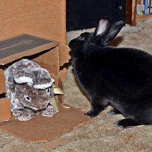 Natasha Rabbitova sculpts her box toy