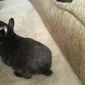 Shakey Bum Bum Bunny