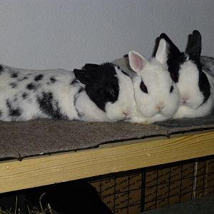 little bunnies 01