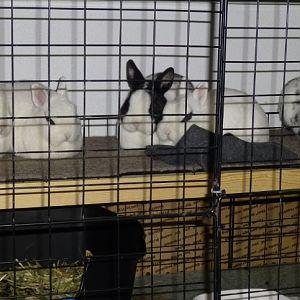 little bunnies 02
