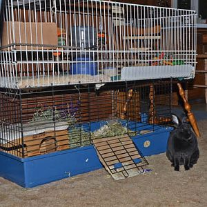 Natasha and her home