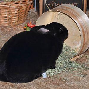 Natasha and her new hay bowl