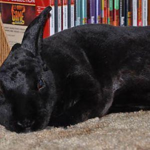 Natasha, resting