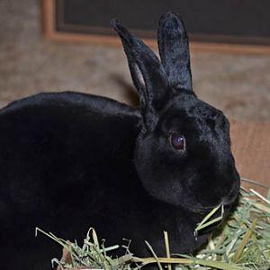 Natasha and the yummy hay
